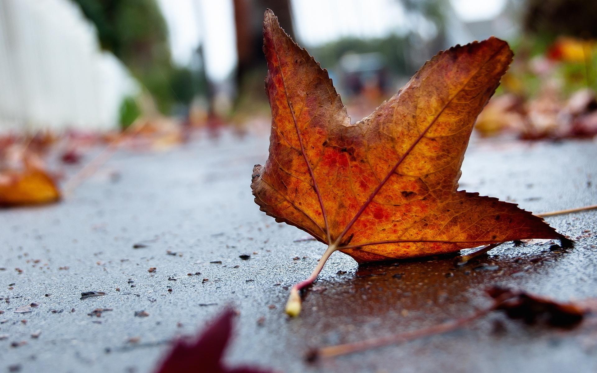 Осень, листья