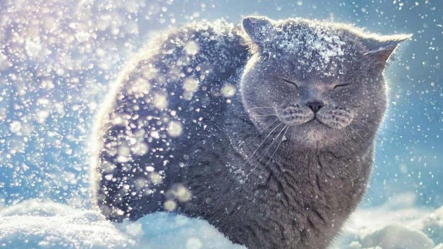 снег, зима, прогноз погоды