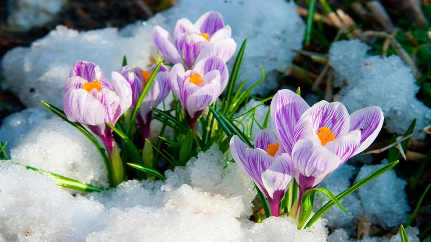 Весна, март